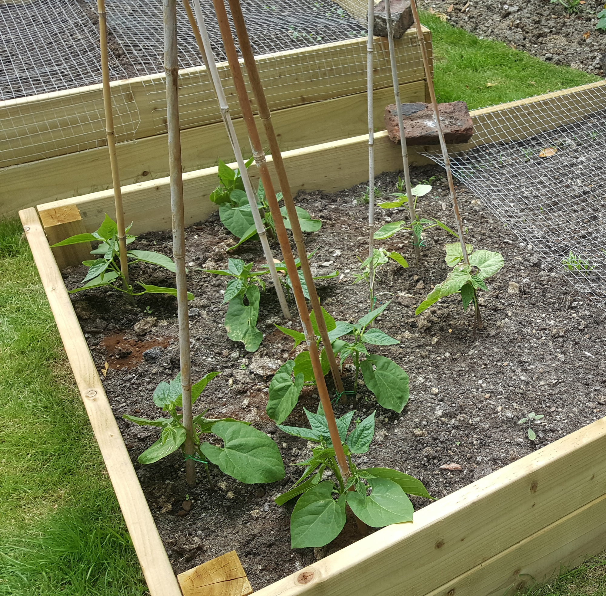 beans at 15th June