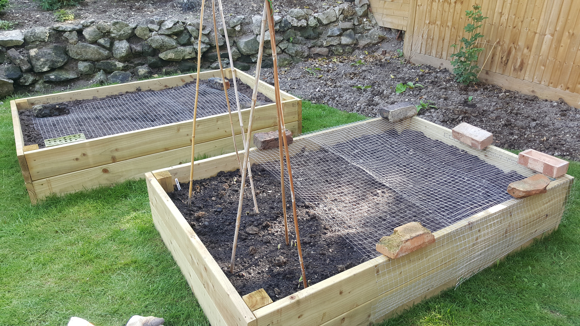 prepared beds with bean poles