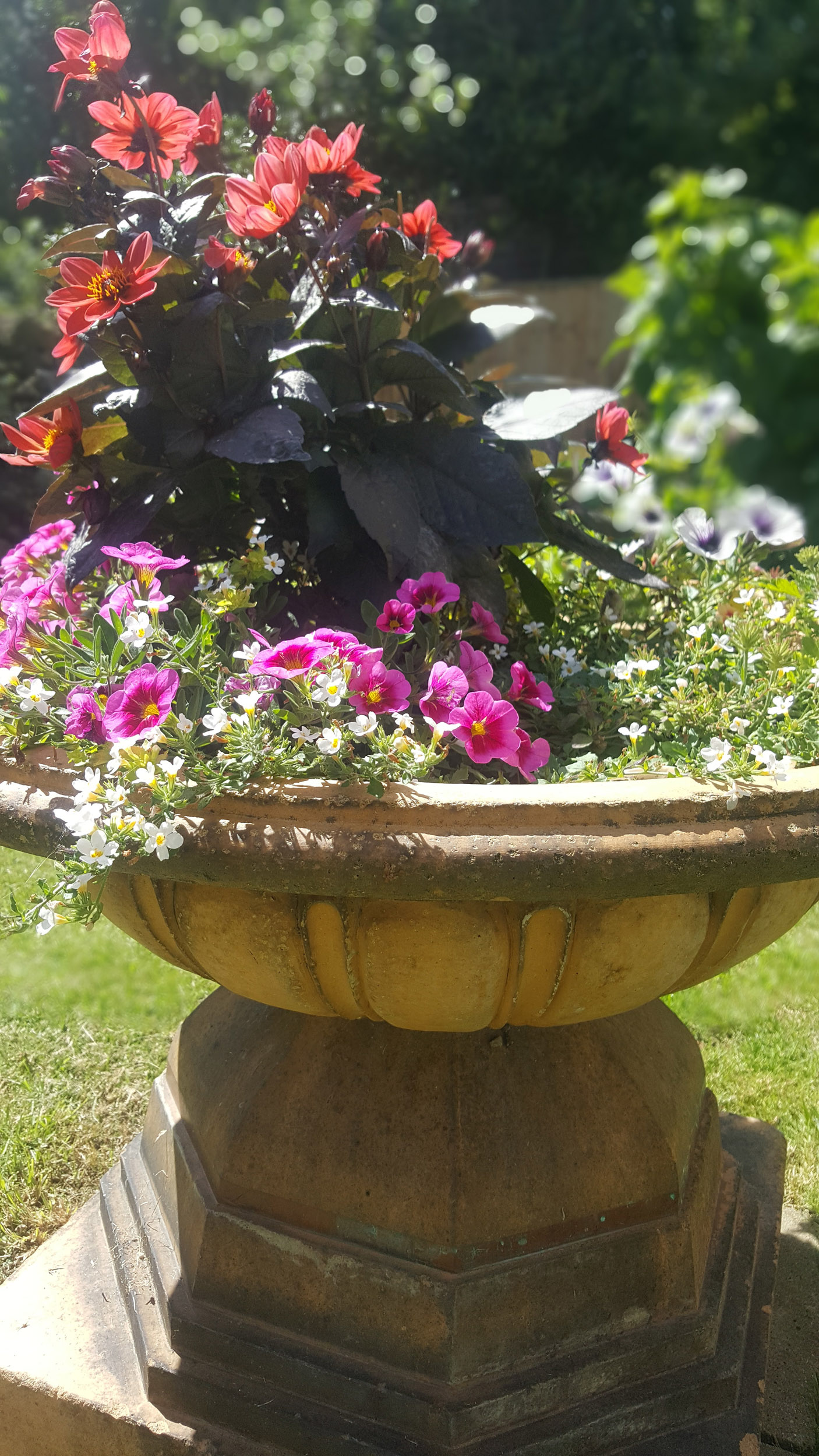 central flower bowl - An Eastbourne Diary