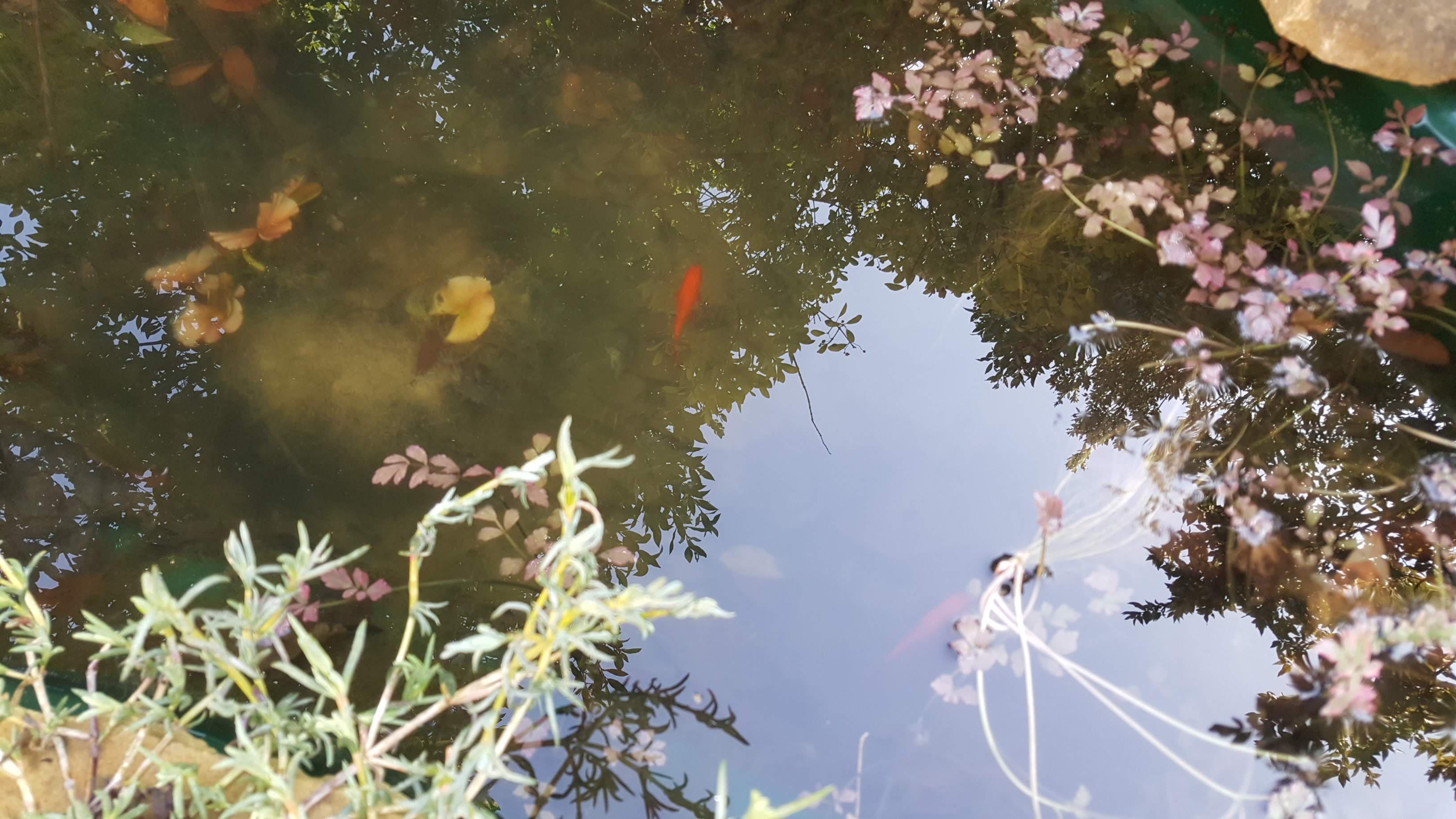 Fish happy in pond, Feb 19