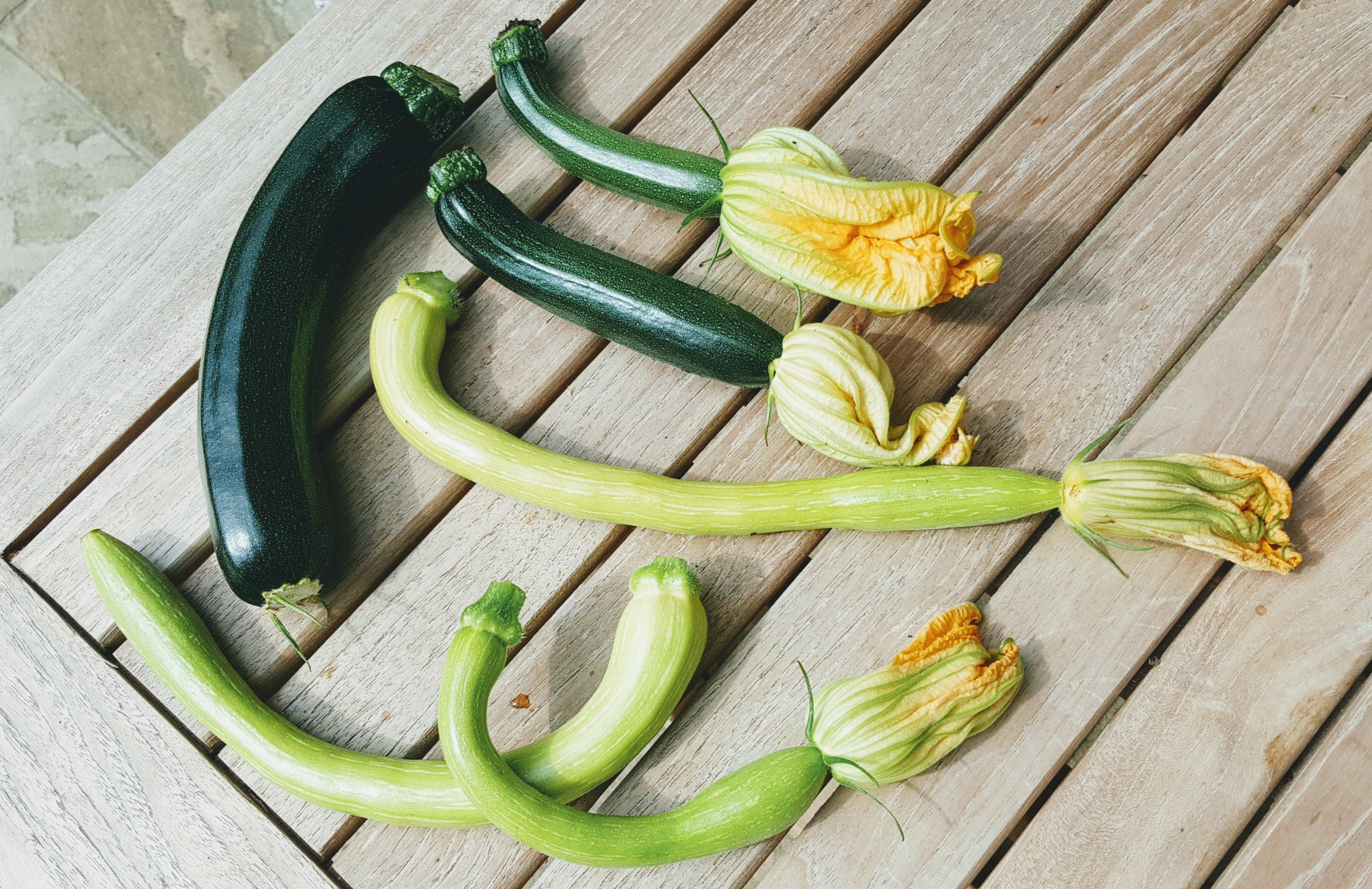 courgettes-varieties