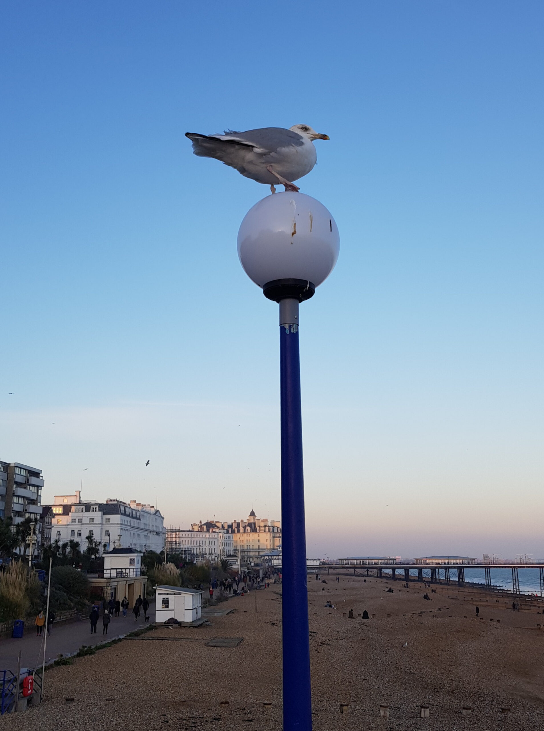 Seagull, Eastbourne beach and pier
